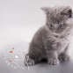 Pet Portraits - Kitten
