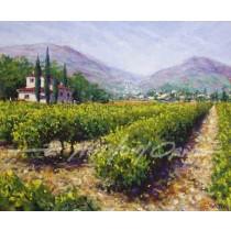 Vinyard - Provence