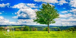 Single Tree 2
